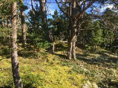 Saaren keskiosan metsää
