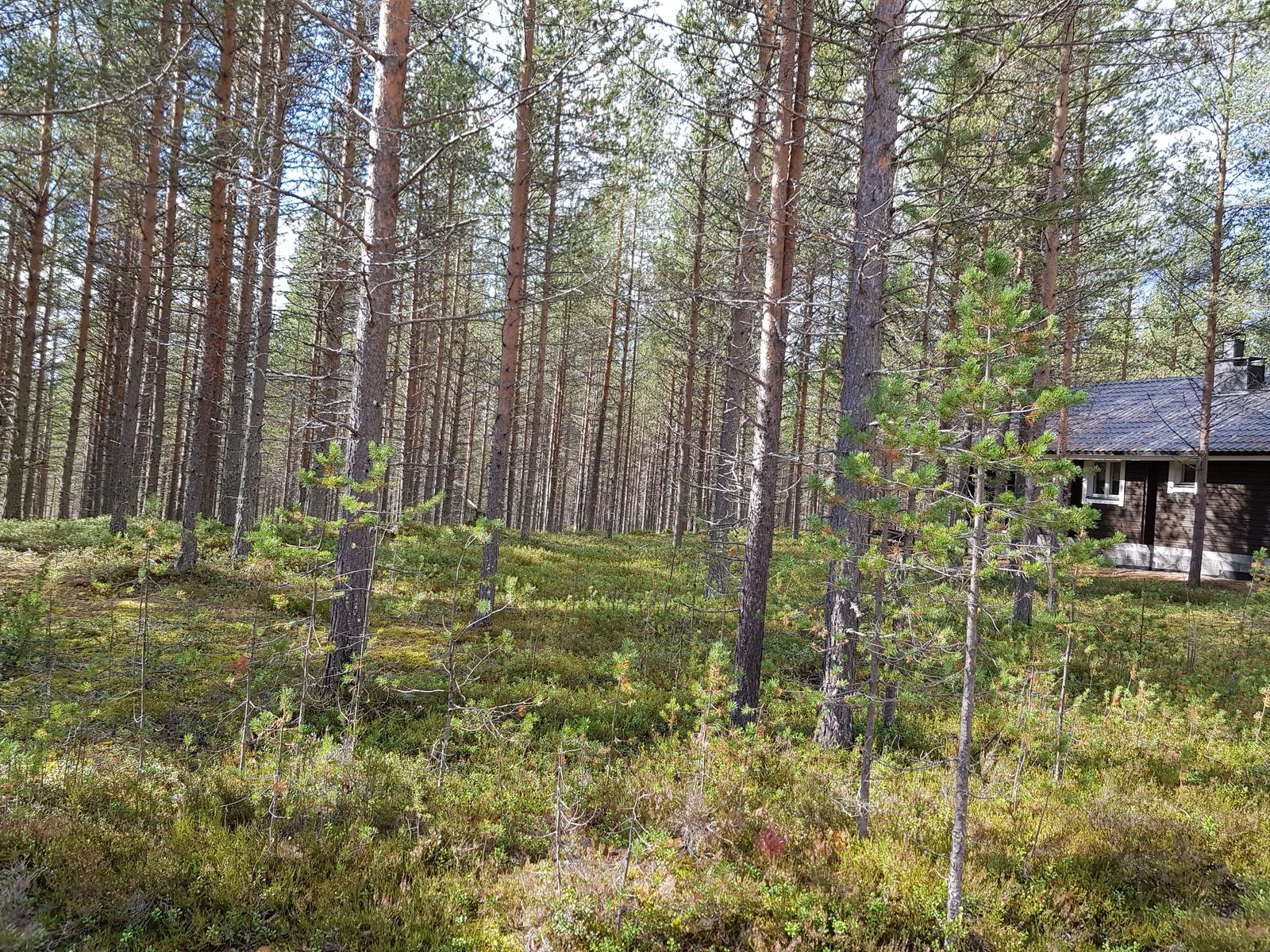 Kuva alueelta