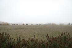 Rauhoittava näkymä pihalta pellon suuntaan.