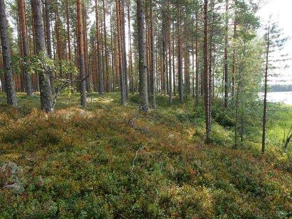 Metsätilat Lieksa
