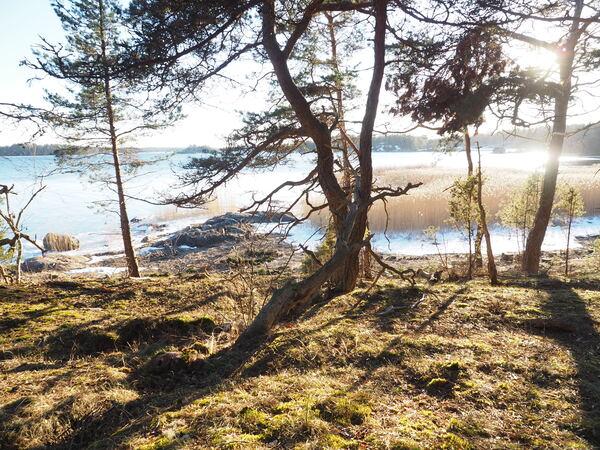 Heisala, Björkudden syd C3