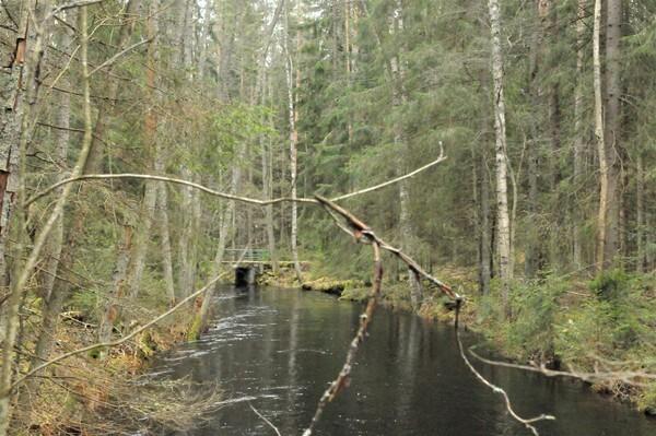 Liesjärventie 599, Tammela (Liesjärvi)