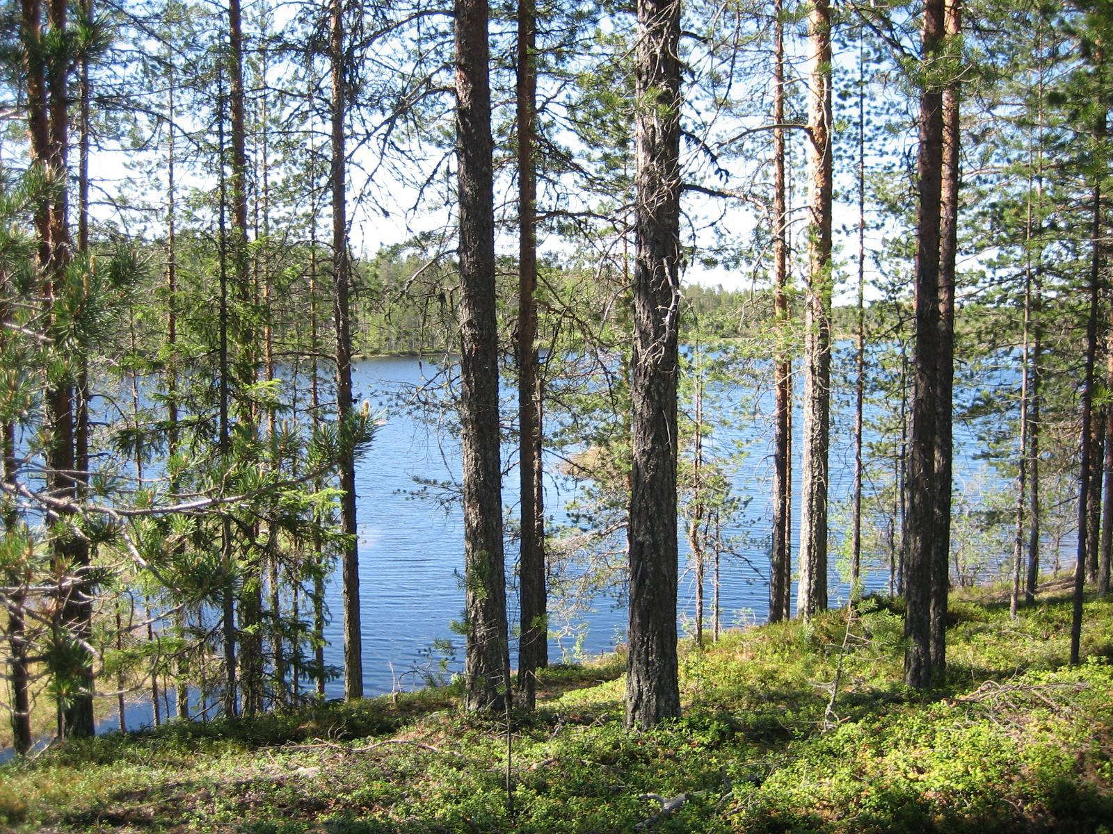 metsähallitus suomussalmi