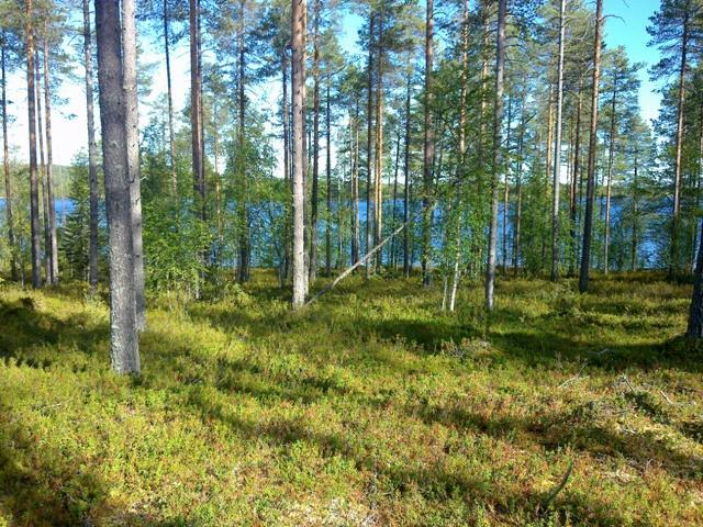luonnonkaunis maisema