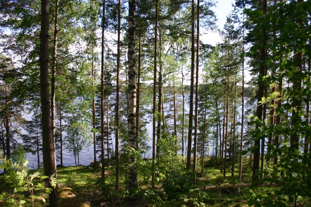 Hevonleuka , 17630 Padasjoki, Vesijaonraitti