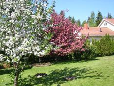 Puutarhan kukkivia puita