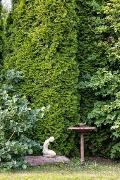 Pihan kartiokuuset luovat vehreää viihtyisyyttä ympäri vuoden.